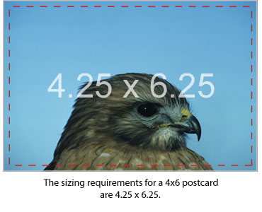 Sizing Requirements For 4x6 Postcard